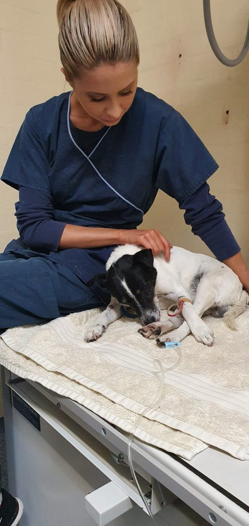 Dana Veterinary Nurse