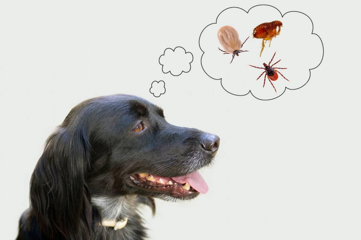 dog and parasites