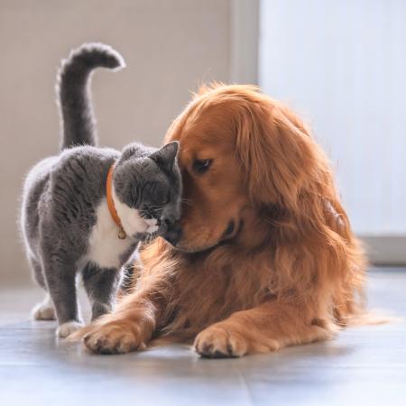 Common Dog & Cat Behaviour Questions